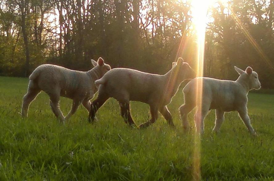 la-empresa_tres-ovejas